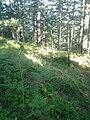 Планина Озрен (72).jpg