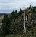 Последняя листва - panoramio.jpg