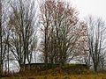 Развалины, Ilzenbergas - panoramio (2).jpg