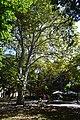 Сквер «Пале-Рояль» DSC 0252.jpg