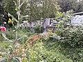 Споменик природе Лалино дрво - пањ са стране.jpg
