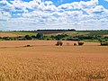 Урожай - panoramio (1).jpg
