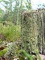 Фото путешествия по Беларуси 725.jpg