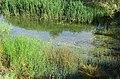 برکۀ کنار آرامگاه زنده یاد فریدون فروغی - panoramio.jpg