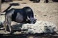 حیوانات باغ وحش مرکزی شهر تفلیس پایتخت گرجستان 29.jpg
