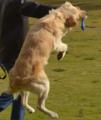 كلب في مصر 13.PNG