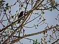 پرنده ای در یکی از روستاهای تویسرکان - panoramio.jpg