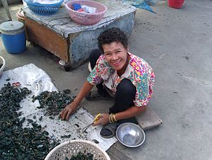 Perna viridis - A worker in Chonburi, Thailand, cutting the beards and removing barnacles from Asian green mussels