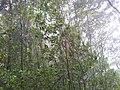 อุทยานแห่งชาติ แม่วงก์ - panoramio.jpg