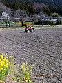 トラクターで農作業 - panoramio.jpg