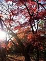 新宿御苑の紅葉(2009.12.12撮影) - panoramio.jpg