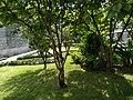 树与阳光.jpg