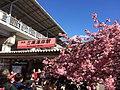 河津桜満開で三浦海岸駅の看板も桜色になっとる。 (25132537266).jpg