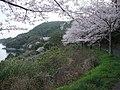 湯の児チェリーライン - panoramio.jpg