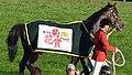 第76回菊花賞で馬着を着装した勝利馬キタサンブラック.JPG