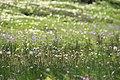 裾合平の花たち - panoramio.jpg