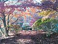 郡山緑水苑の紅葉.jpg