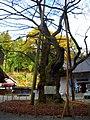 雲峰寺の枝垂桜 - panoramio.jpg
