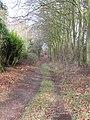 -2019-12-06 Footpath, Foxhills wood, Frogshall, Northrepps (3).JPG
