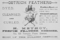 1884 ostrich TemplePlace Boston.png