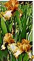 1973 Cooley's Gardens (1973) (16048980144).jpg