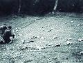 1991-Etxalar usategiak-1.jpg