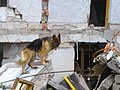 2008년 중앙119구조단 중국 쓰촨성 대지진 국제 출동(四川省 大地震, 사천성 대지진) SSL26863.JPG