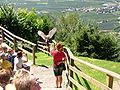 2008 07 15 Bird Care Centre of Castel Tyrol 60955 D9858.jpg