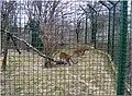 2009 03 15 Veszprém 498 (51191506188).jpg