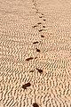 2012-01-11 11-40-34 Spain Canarias Jandía.jpg