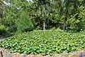 2014 Suchum, Ogród botaniczny (36).jpg