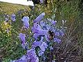 2016.06.21 19.10.44 DSC04992 - Flickr - andrey zharkikh.jpg