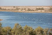 20160104-Lake in Samawa desert Iraq 0356