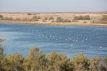 20160104-Lake in Samawa desert Iraq 0356