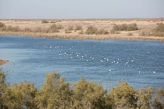 A reservoir in the Samawah desert Southern Iraq 20160104-Lake in Samawa desert Iraq 0356.jpg