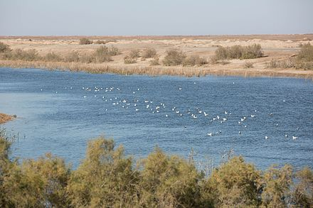 A reservoir in the Samawa desert Southern Iraq 20160104-Lake in Samawa desert Iraq 0356.jpg