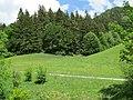 2018-05-13 (226) Nature at Bichlhäusl in Frankenfels and view to Kirchberg an der Pielach, Austria.jpg