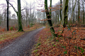 2018-12-22-December-watercolors.-Hike-to-the-Ratingen-forest. File-02.png