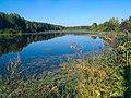 2020-08-23 пруд в дер. Мошни.jpg