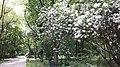 20200614 142922 Park Szarych Szeregów in Łódź June 2020.jpg