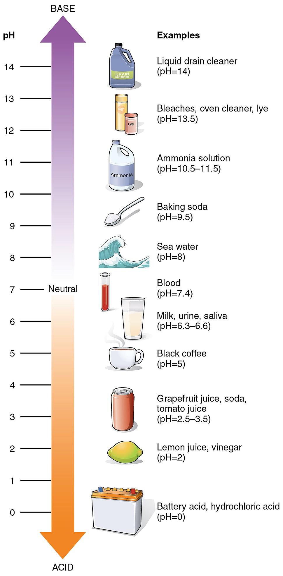 216 pH Scale-01