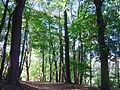 2286-00020 Parc de Woluwe (16).JPG