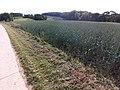 24601 Wankendorf 07.jpg