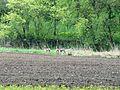 260959 Landschaften.jpg