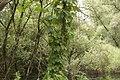 33 Forêt rhénane.jpg