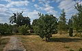 61-234-5012, Білокриницький парк.jpg
