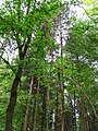 76870 Kandel, Germany - panoramio (1).jpg