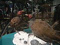 9861National Museum of Natural History Manila 49.jpg