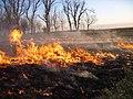 A Burning for Conservation in Southeastern South Dakota (16999229311).jpg