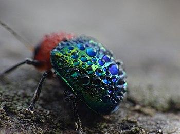 A bug's morning.jpg